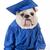 érettségi · diplomás · kutya · kutyakölyök · sapka · háttér - stock fotó © willeecole