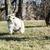 iki · köpekler · çalışma · dışında · mutlu - stok fotoğraf © willeecole