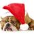 cão · inglês · buldogue · seis - foto stock © willeecole