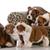 父 · 犬 · 子犬 · 家族 · 英語 · ブルドッグ - ストックフォト © willeecole