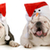 santa dogs stock photo © willeecole