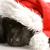 newfoundland puppy wearing santa hat   twelve weeks old stock photo © willeecole
