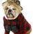 jumelles · chien · regarder · papier · verre - photo stock © willeecole