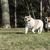 iki · köpekler · oynama · park · karışık - stok fotoğraf © willeecole