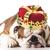 cucciolo · indossare · corona · specchio · bellezza · ritratto - foto d'archivio © willeecole