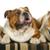 drie · week · oude · witte · Engels · bulldog - stockfoto © willeecole