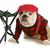 cão · de · caça · estúdio · retrato · seis · húngaro - foto stock © willeecole