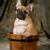 cute · cucciolo · francese · bulldog · legno · mesi - foto d'archivio © willeecole