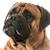 bullmastiff portrait stock photo © willeecole