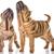 kettő · kínai · kiskutyák · izolált · fehér · hónapok - stock fotó © willeecole