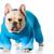 cão · suéter · inglês · buldogue · rosa - foto stock © willeecole