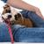 kutya · póráz · száj · aranyos · retkes · terrier - stock fotó © willeecole