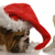 renifer · funny · christmas · psa · tle · smutne - zdjęcia stock © willeecole