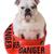 huncut · kutya · bulldog · veszély · szalag · körül - stock fotó © willeecole