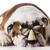 kutya · visel · szemüveg · aranyos · retkes · terrier - stock fotó © willeecole