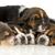cara · cute · sabueso · perro · blanco - foto stock © willeecole