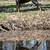 köpek · ayakta · su · çim · saç - stok fotoğraf © willeecole