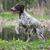 портрет · черный · собака · животного · студию · ПЭТ - Сток-фото © willeecole
