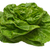 butter lettuce with clipping path stock photo © winterling