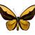 exótico · colorido · borboletas · quatro · isolado · branco - foto stock © winterling