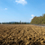 the landscape of the tuscany italy stock photo © wjarek