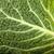 капуста · белый · саду · зеленый · листьев - Сток-фото © wjarek