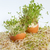 fresh alfalfa sprouts and spring easter egg stock photo © wjarek