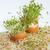 rozwój · zielone · roślin · jaj · powłoki · biały - zdjęcia stock © wjarek