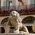 лев · фонтан · основной · города · квадратный · воды - Сток-фото © wjarek