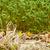 fresco · alfafa · branco · textura · comida · abstrato - foto stock © wjarek
