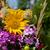 belle · fleurs · herbes · fleur · rose · femmes - photo stock © wjarek