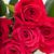 rosa · vermelha · broto · flor · jardim · flor - foto stock © wjarek