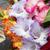 colorful bouquet of gladioli stock photo © wjarek