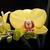 flor · blanca · orquídeas · aislado · blanco · negro · flor · negro - foto stock © wjarek