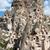 view of uchisar castle in cappadocia stock photo © wjarek