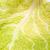 fraîches · chou · feuille · texture · nature · fond - photo stock © wjarek
