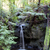 pas · description · forêt · arbres · Californie - photo stock © wolterk