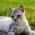 портрет · кошки · саду · Cute · глазах - Сток-фото © x-etra