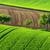 zöld · vidék · tájkép · fák · legelő · barna - stock fotó © Xantana