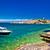 сосна · пляж · Хорватия · воды · природы · морем - Сток-фото © xbrchx