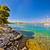 çam · ağacı · plaj · Hırvatistan · su · doğa · deniz - stok fotoğraf © xbrchx