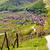 berg · vallei · adelaar · nest · rock - stockfoto © xbrchx