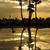 palmbomen · silhouet · water · mooie · landschap - stockfoto © xuanhuongho