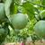 yarım · tohumları · düşen · dışarı · meyve · kırmızı - stok fotoğraf © xuanhuongho