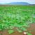 Вьетнам · цветок · Lotus · пруд · цвести - Сток-фото © xuanhuongho