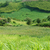 Green, agriculture plant, vast field stock photo © xuanhuongho