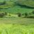 cukier · trzcinowy · panorama · panoramiczny · dekoracje · plantacja · niebo - zdjęcia stock © xuanhuongho