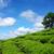 impressionante · paisagem · Vietnã · chá · plantação - foto stock © xuanhuongho