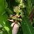 banán · zöld · napos · levél · konzerv · víz - stock fotó © xuanhuongho
