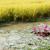 gökyüzü · çim · manzara · arka · plan · mavi - stok fotoğraf © xuanhuongho